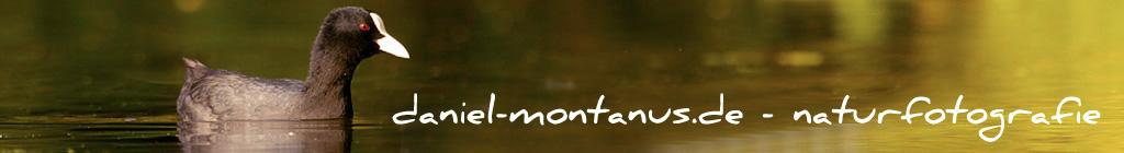 Daniel Montanus - Naturfotografie